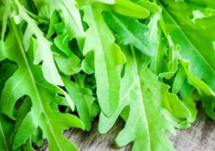 supplementi-rucola